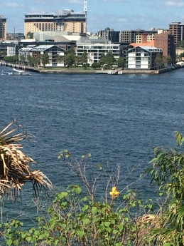 My home of the past six months as viewed from the Barangaroo Reserve